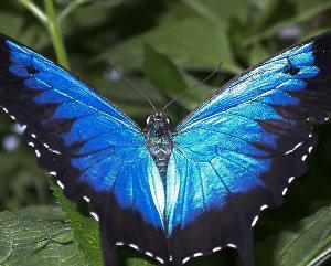 Ulisse Blu